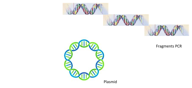 plasmid fragent pcr