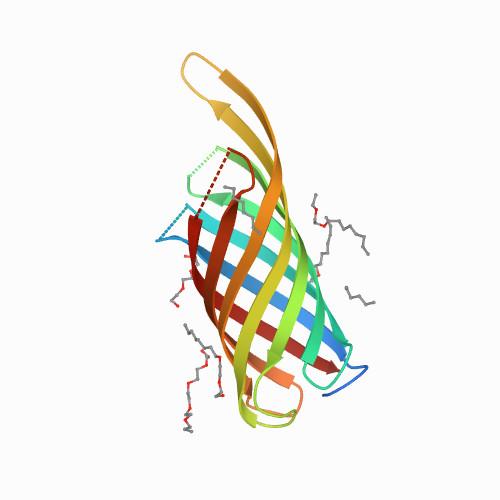 OprF protein structure